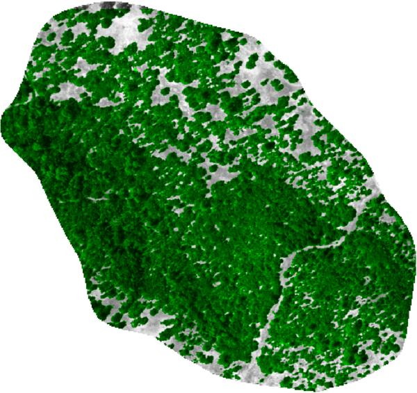 Estimated Canopy Cover: estimated from NAIP imagery, by SMAP supervised classification.